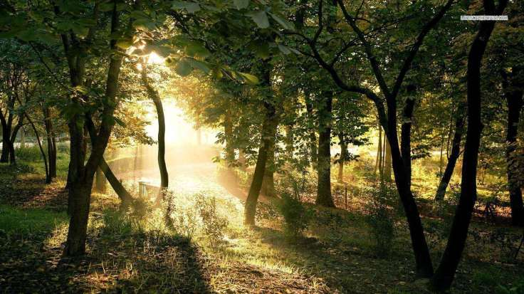forest-clearing-33-1366x768