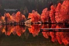 arbres-contre-arbres-451x300