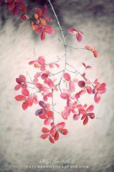 autumn-poetry-534x800