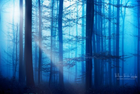 light-box-blues-449x300