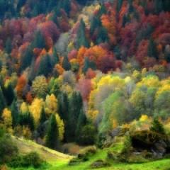 palette-nature3-300x300