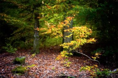 www-naturephotographie-com-arbuste-en-sous-bois