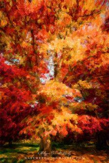 www-naturephotographie-com-beaute-de-saison-534x800