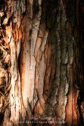 www-naturephotographie-com-ecorces