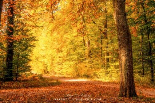 www-naturephotographie-com-foret-doree-en-octobre