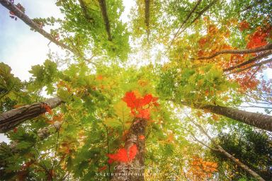 www-naturephotographie-com-vue-dautomne